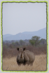 Tours and Safaris to the Pilanesberg National Park. Big 5 Game Reserve in South Africa.></div> <div id=