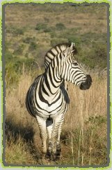 Pilanesberg Photos and Wildlife Galleries.