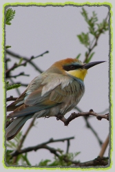 Pilanesberg Biding Safaris. Birding in the Pilanesberg National Park. Pilanesberg Bird Species List.